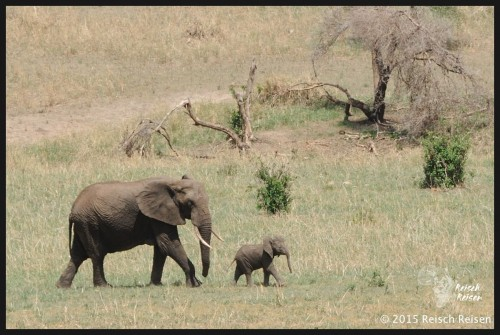 Tansania - Safari-140_DSC_6023_1_hp