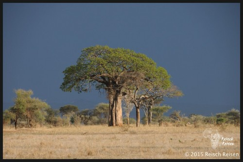 Tansania - Safari-147_DSC_6066_hp